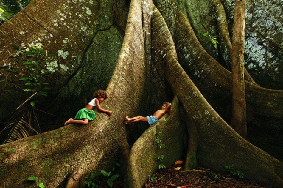 s Samaúma_a_rainha_das_florestas